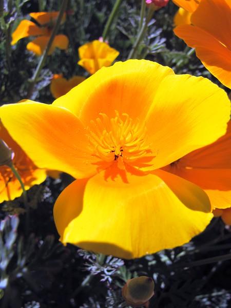 amh FLOWERS (1071).jpg