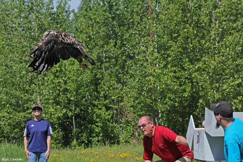 Dave's B-day eagle 019.jpg