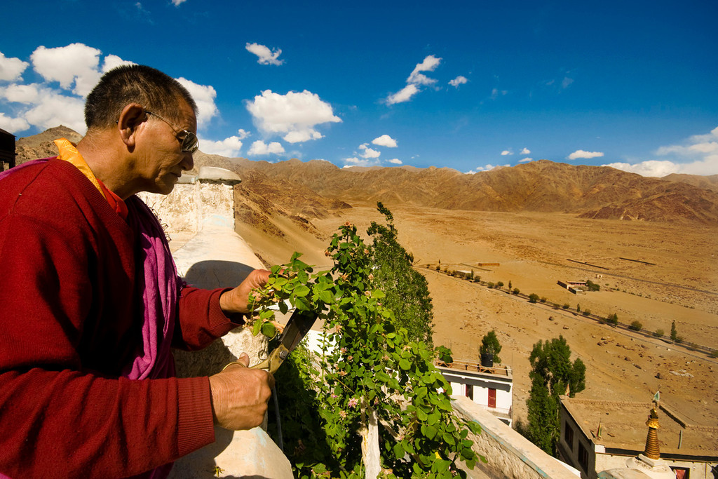 """Nurturing Lives ... ""<br /> <br /> Atop Thiksey Monastery, Ladakh"