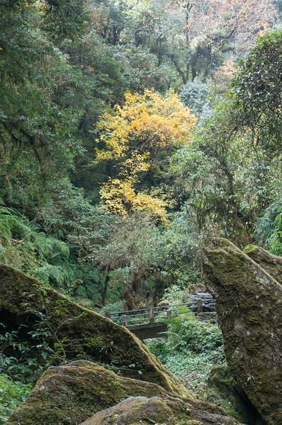 Nepali Forest