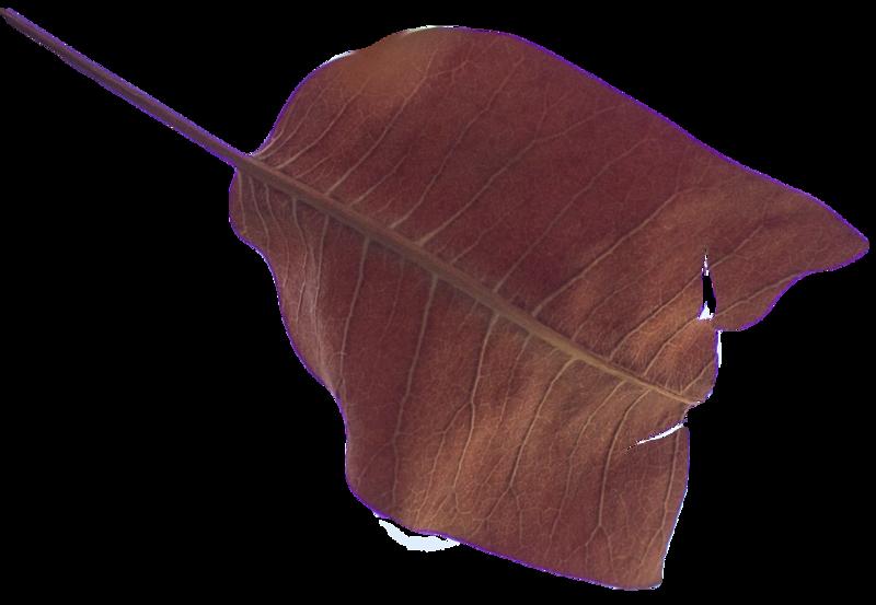 Leaf 39.png