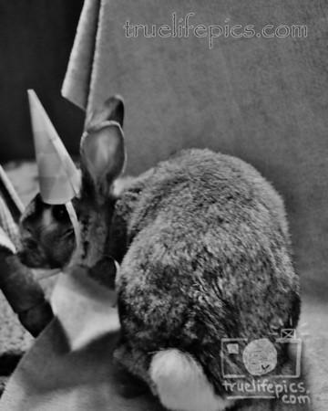{{.BunnyBirthdayParty.March.2014.}}