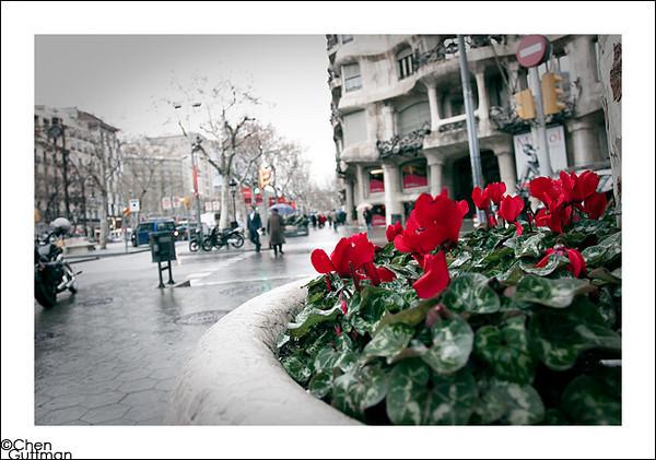25-01-2010_11-49-34.jpg