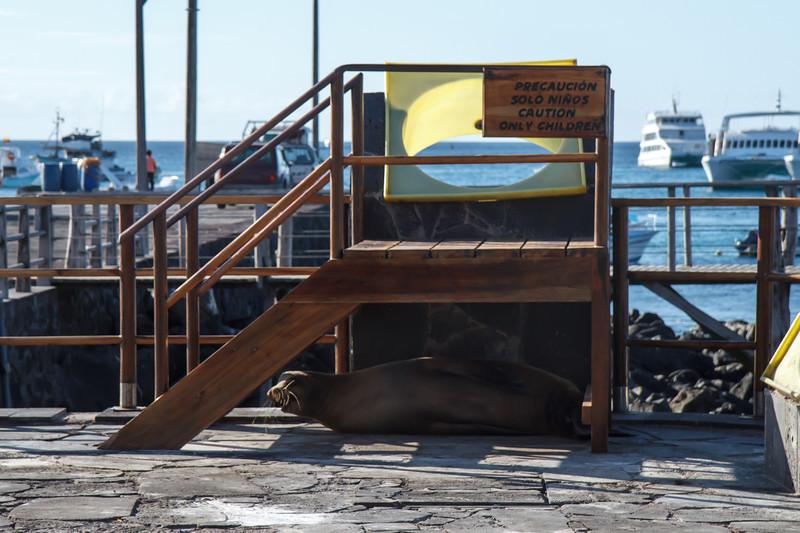 Galapagos Sea Lion under Children Only sign at Puerto Baquerizo Moreno, San Cristobal, Galapagos, Ecuador (11-21-2011)-25.jpg