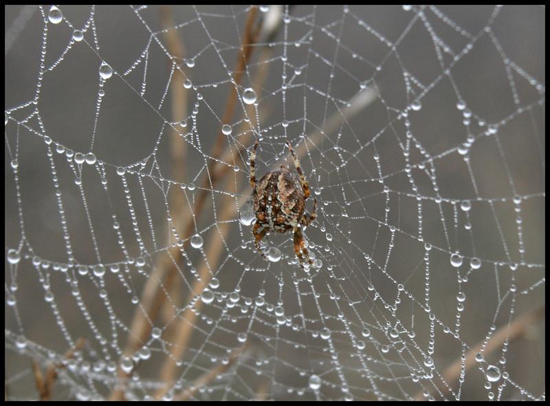 7605 Spider Web Drops.jpg