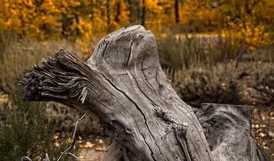 Eastern Sierra Fall Color 2017