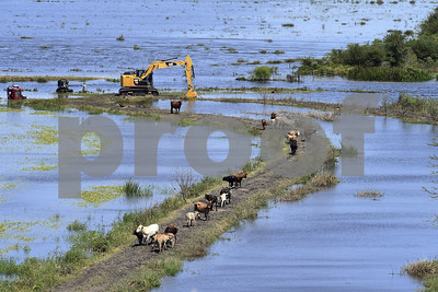 thousands-of-texas-cattle-may-have-died-in-wake-of-harvey