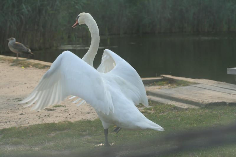 Wildlife at Cranberry Bog, Westhampton Beach, NY.