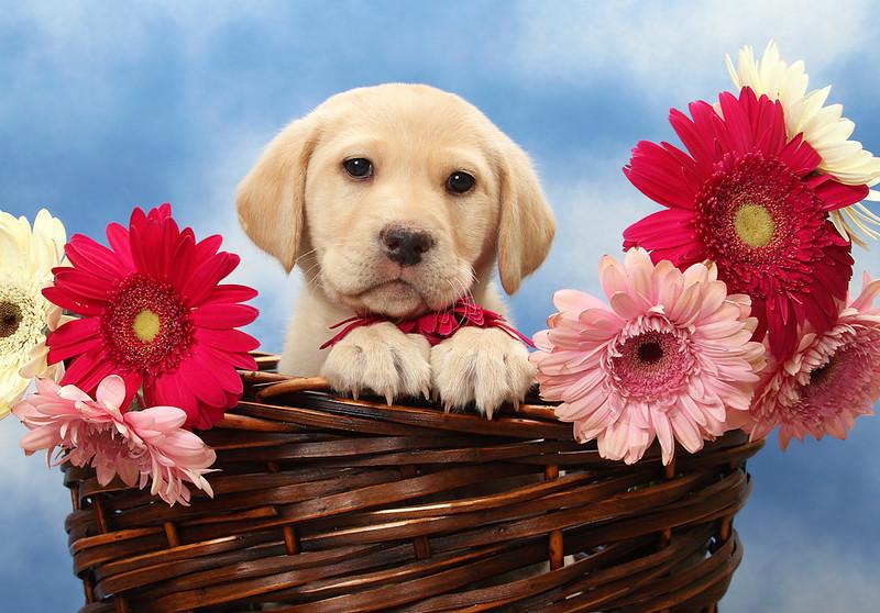 Puppy Basket.jpg