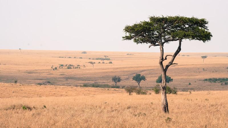 safari-2018-126.jpg