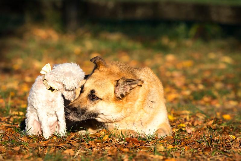 16_1024_buntingdogs-35.jpg