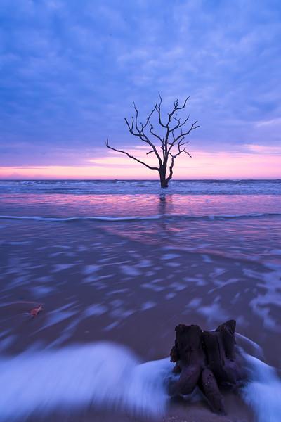 Tree at Boneyard Beach3.jpg