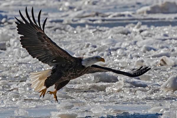 Eagles 2019