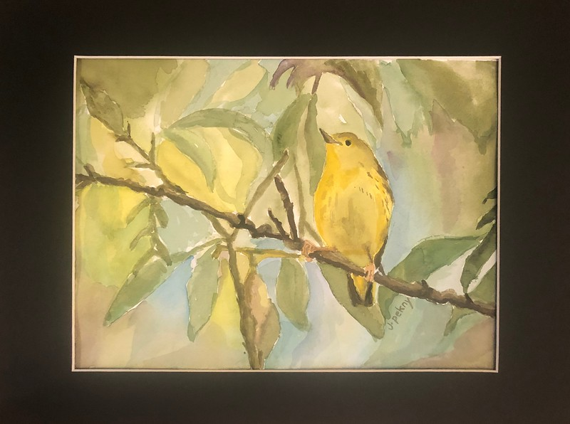 Yellow Warbler by Jessica Pekny
