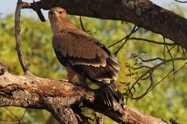 South Africa Kruger National Park Birds