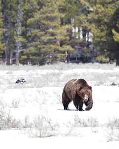 Yellowstone - May 2013