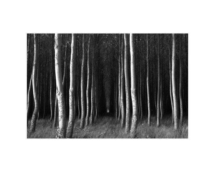 b:w Oregon Trees #2.jpg