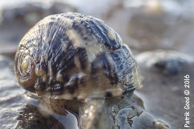Various Neritimorpha