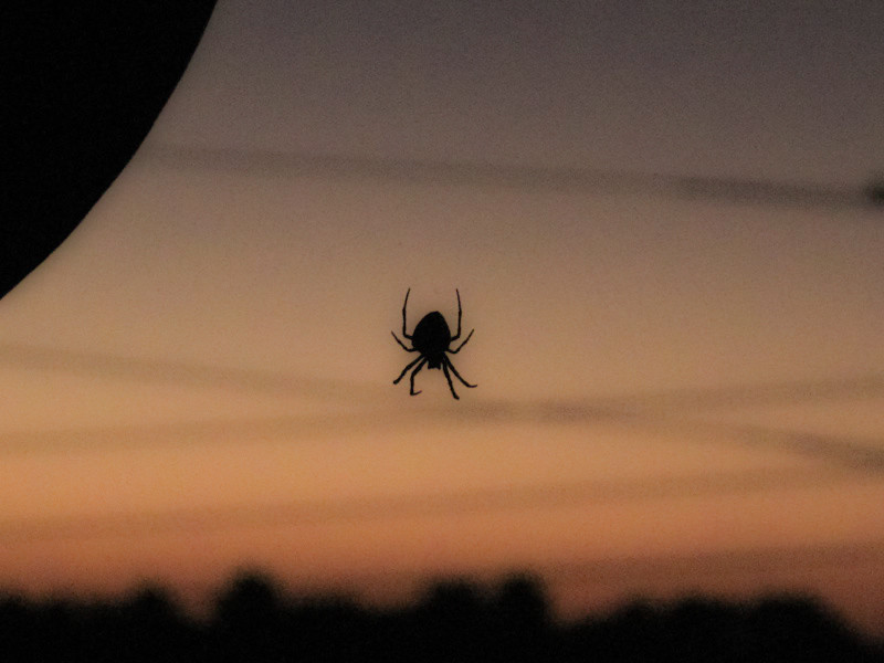 nov2-spider.jpg