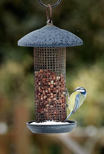 Day 60 - Garden Birds-4371.jpg