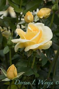 GardenZeus Roses