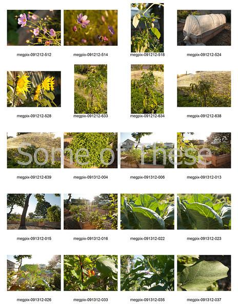 Plants Collage-2.jpg