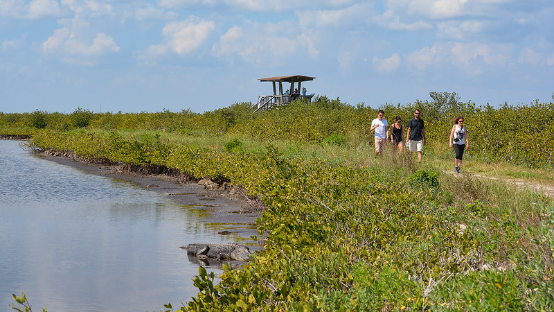 Observation deck, hikers, and alligator