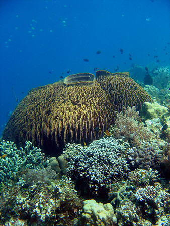 House Reef 4/13