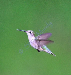 Hummers 2009
