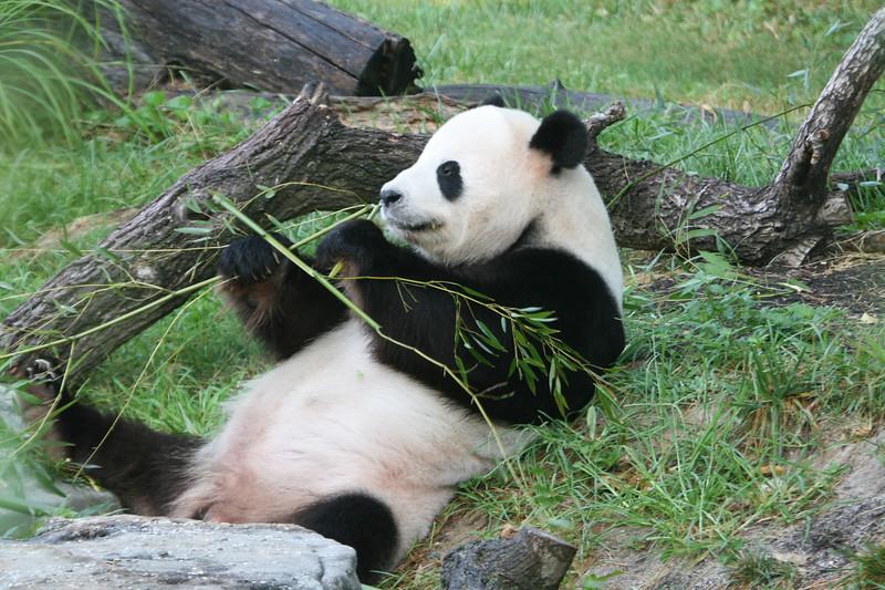 Panda072807_021.JPG