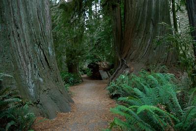 Redwood National Park 2009