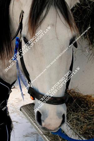 Molly 12-28-2012