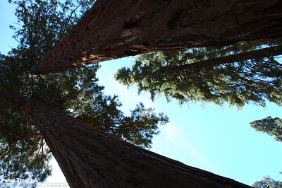California - Sequoia and Kings Canyon N. P. - June 2010
