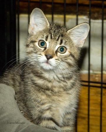 Middleburg Humane Foundation Kitties