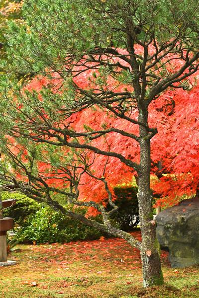 Portland Japanese Garden  11-11-11  3540.jpg