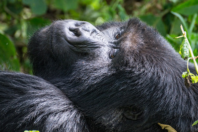 Mount Bisoke, Rwanda and the Mountain Gorillas