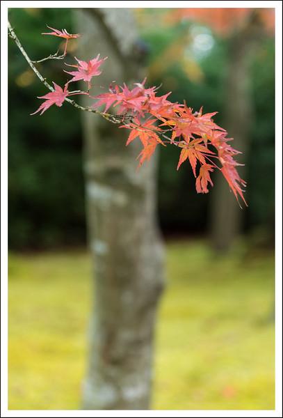 Hakone Museum-0629.jpg