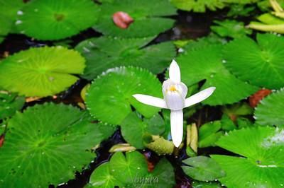 Singapore: Botanic Gardens