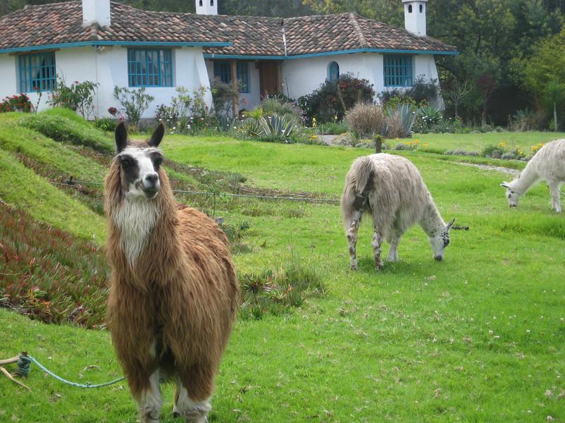 Quito 012.jpg