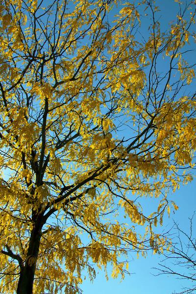 Pretty autumn tree
