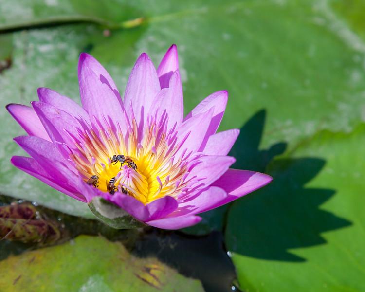 Bees in Bangkok