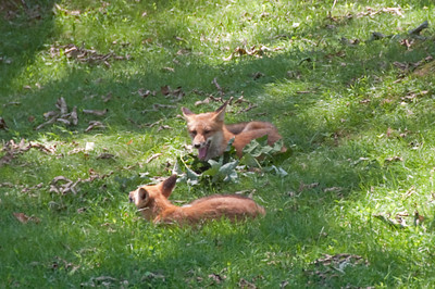 Wildlife in the Yard
