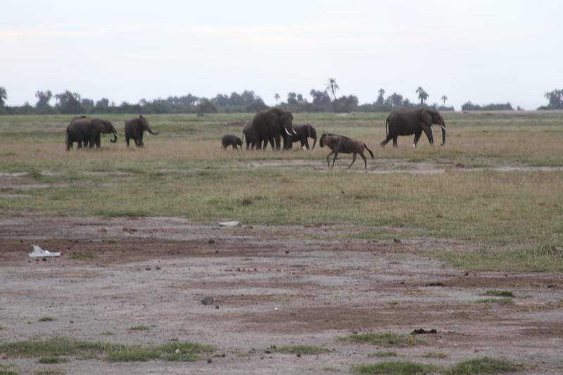 Kenya 2019 #2 295.JPG