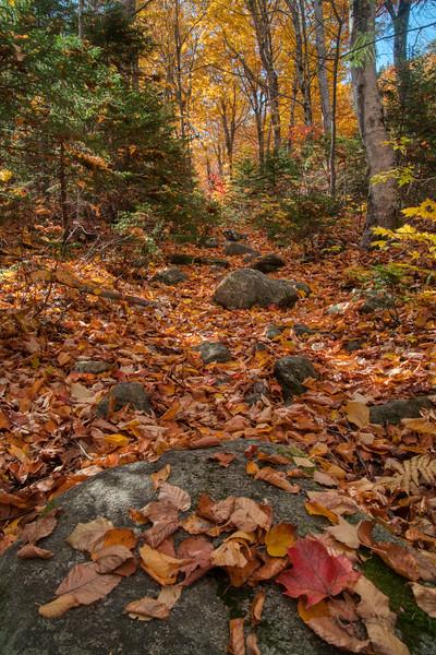 Maine Fall 2019-35.jpg