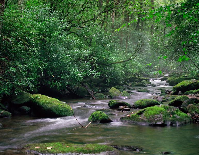 Stream in Joyce Kilmer Park, NC