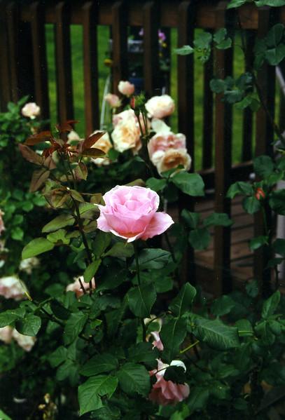 1999-014.jpg