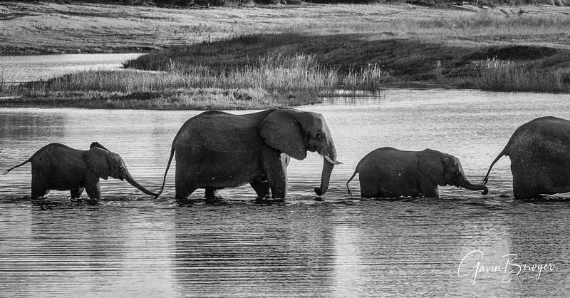 Elephants Botswana-13.jpg