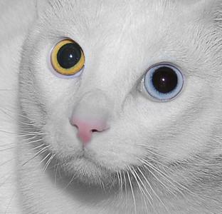 Humane Society Cats