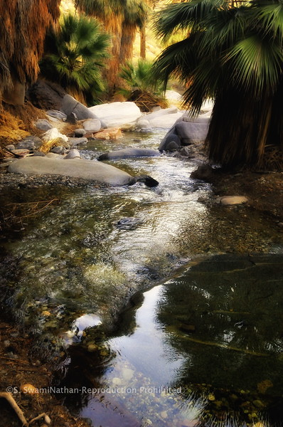 Indian Springs Oasis, Palm Springs, CA