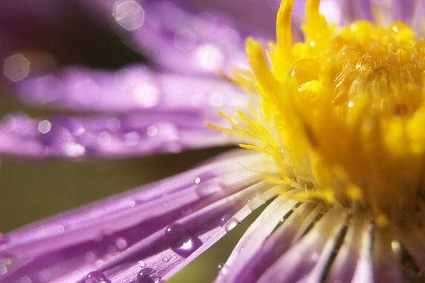 Flower and plant Closeup/Macros #1